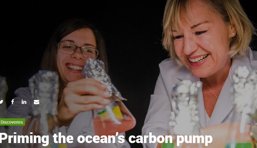 """Priming the ocean's carbon pump"""